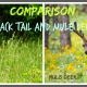 Comparison: Black Tail and Mule Deer