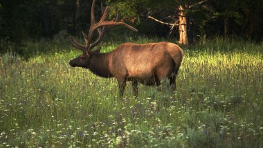 Can I use a .308 for Elk Hunting?