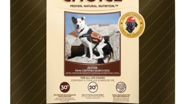 A Guide to the Best Dog Food for Hunting Dogs