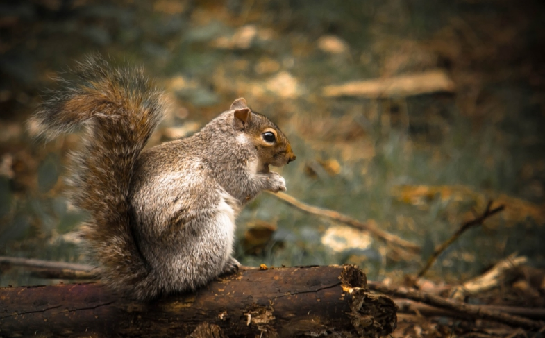 How to Choose the Best Scope for Squirrel Hunting