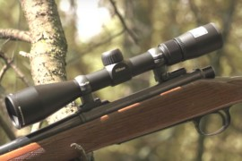 The 4 Best Varmint Scopes Reviewed [2017]